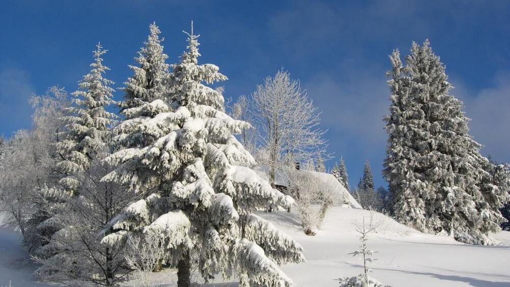 Image Raquettes et Remise en forme en Haute Forêt Noire