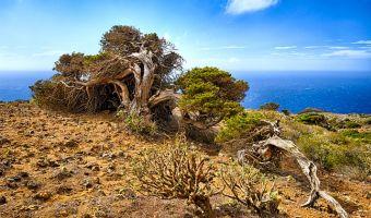 Canaries: l'île sauvage d'El Hierro