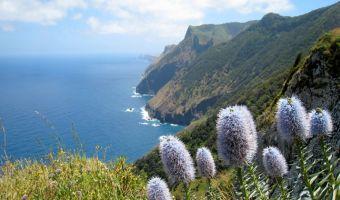 Fleurs sur l'île de Madère