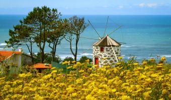 Fleurs et moulin au Portugal