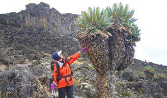 Voyage à pied : L\'Ascension du Kilimandjaro et la découverte des grands parcs animaliers