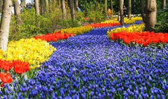 Voyage à pied : Pays-Bas : Le Nord de la Hollande, au c\'ur des tulipes