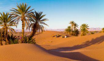 Palmiers dans le désert du Sud marocain