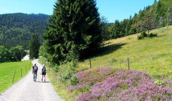 Randonnée en Forêt Noire