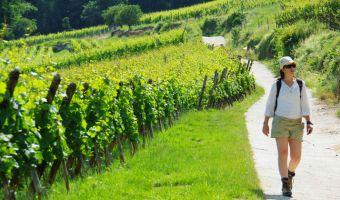 Randonnée dans un vignoble d'Alsace