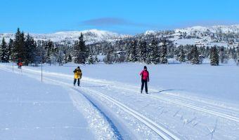 Ski de fond à Golsfjellet