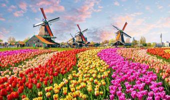 Tulipes et moulins à Zaanse Schans en Hollande