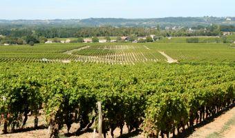 Vignoble du Château d'Yquem