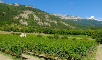 Vignoble à Châtillon-en-Diois