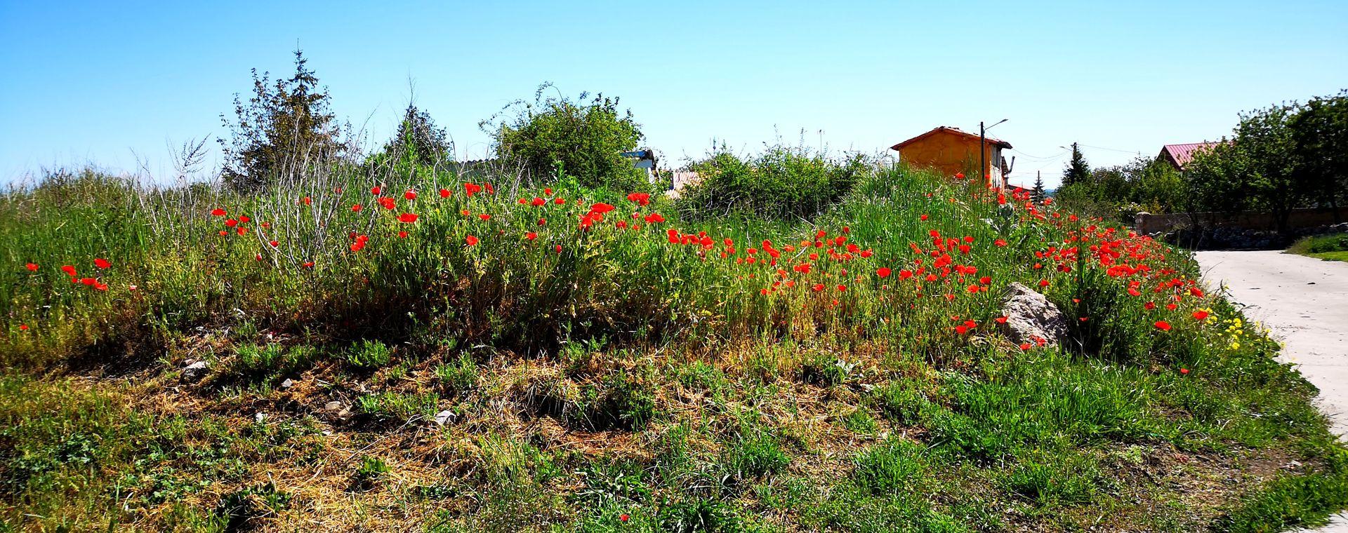 Voyage à pied : Chemins de Saint-Jacques : Randonnée de Logroño à Burgos