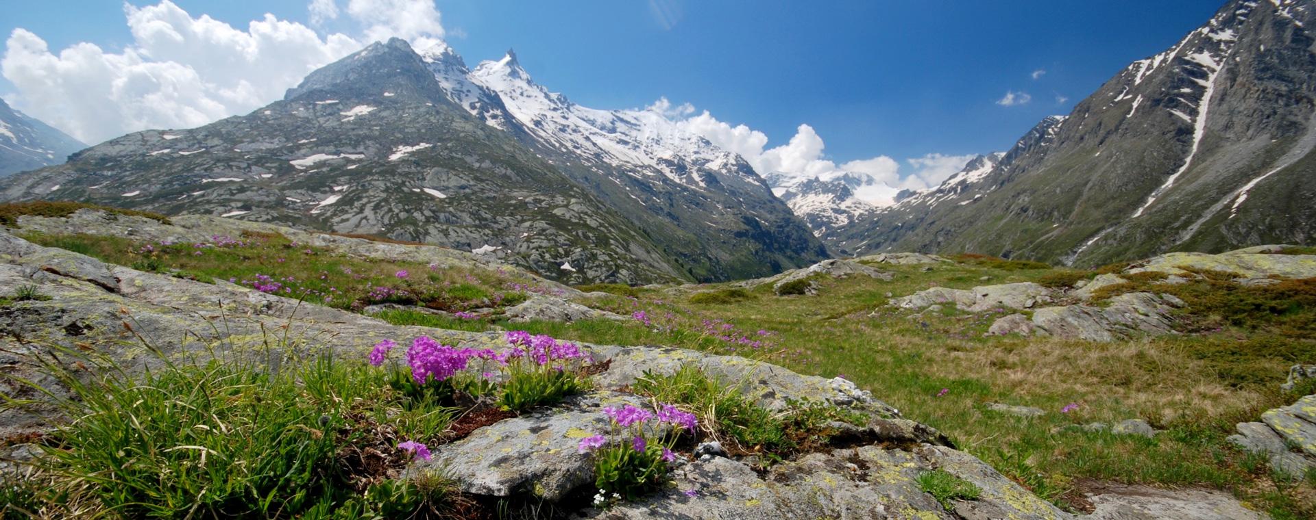Image Savoie : Le Chemin du Petit Bonheur