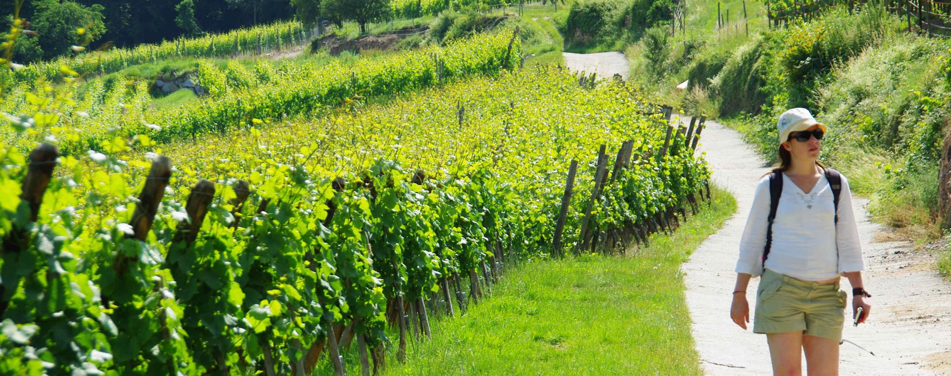 Image Ballons et Vignobles d'Alsace
