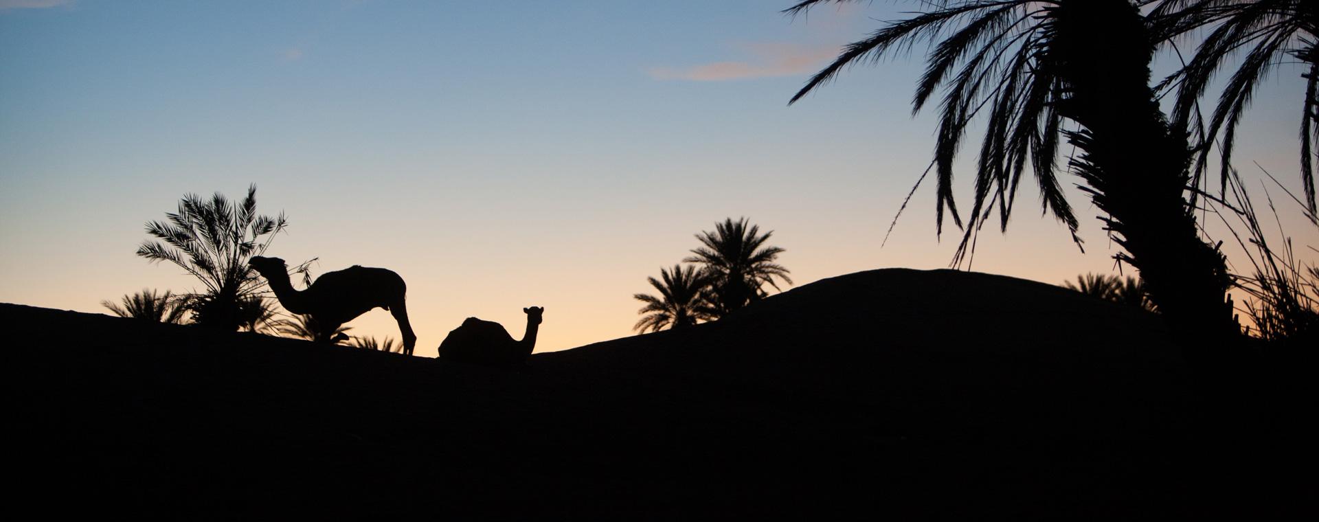 Image Randonnée et Yoga dans le désert marocain
