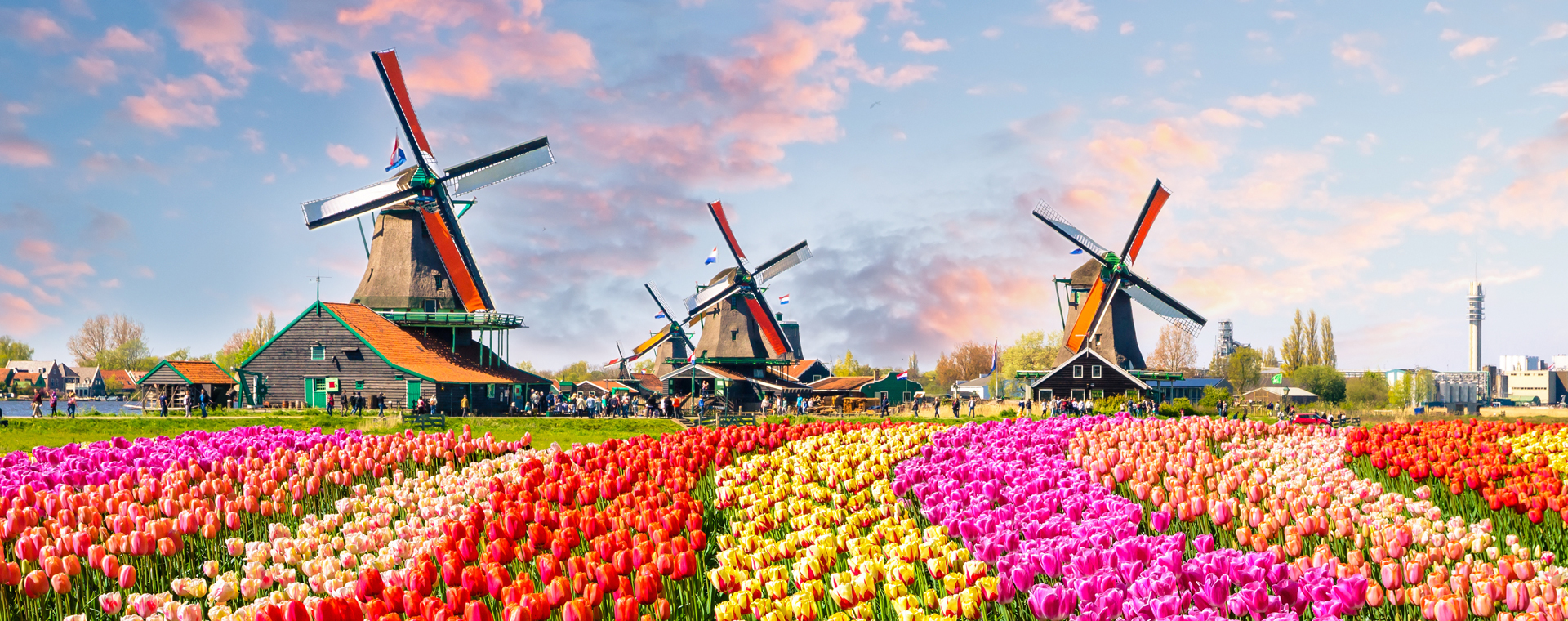 Image La Hollande et ses tulipes, c'est Magnifique !
