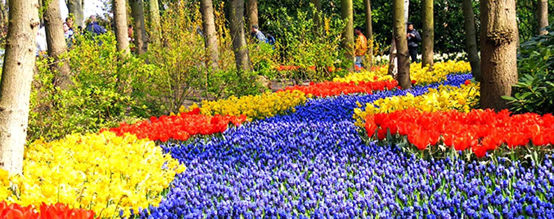 Voyage à pied : Le Nord de la Hollande, au cœur des tulipes