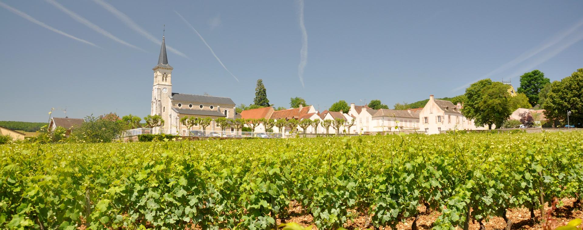 Image Le Chemin des grands crus : de Dijon à Santenay