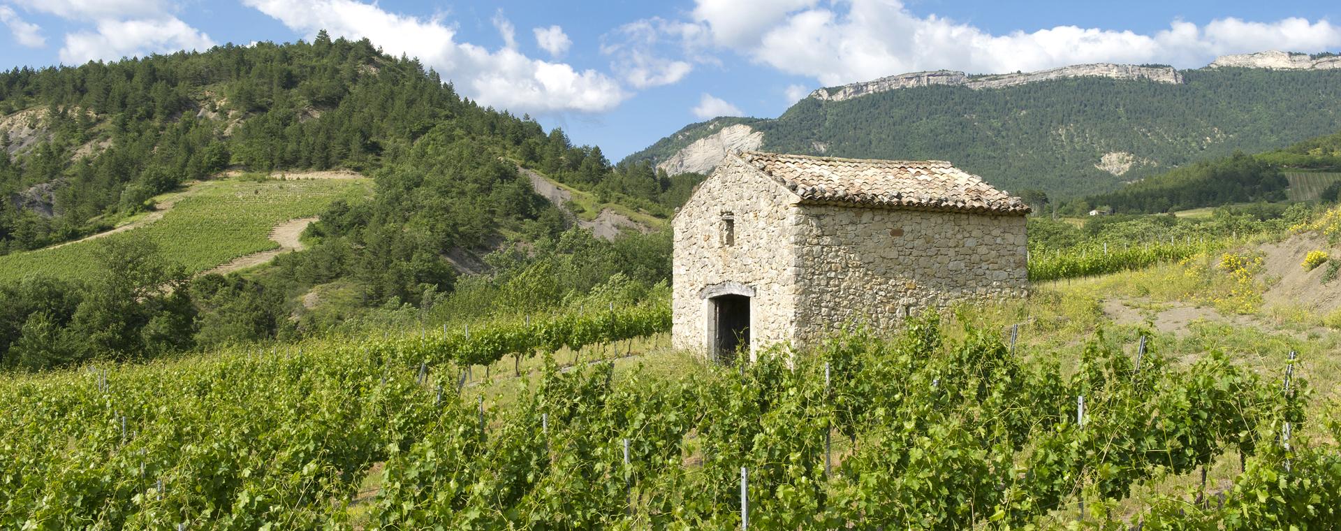 Voyage à pied France : Retrouvance® : vallée de la Roanne